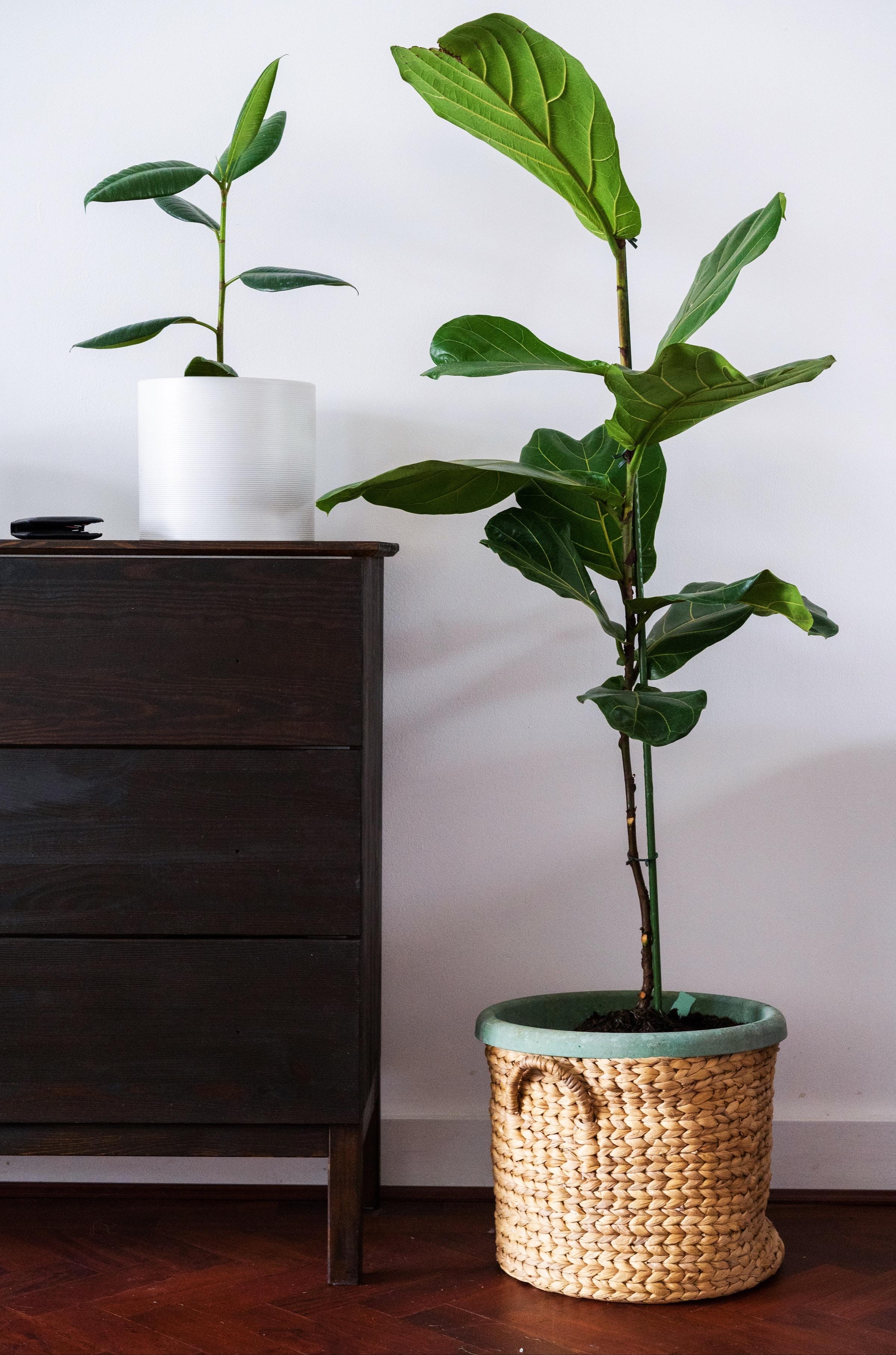 House Plants - Rumman Amin